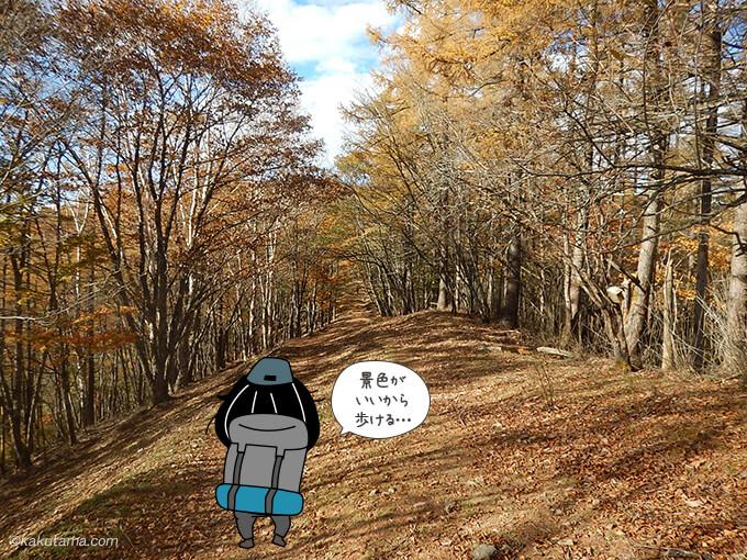 落ち葉の下り道