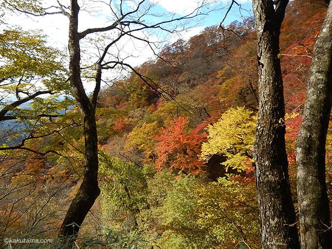 鴨沢ルートから見た紅葉