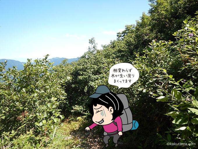 イブリ山を越えても木々がワサワサ