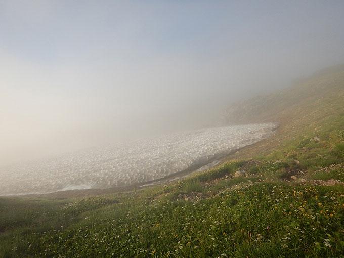 雪渓とお花畑