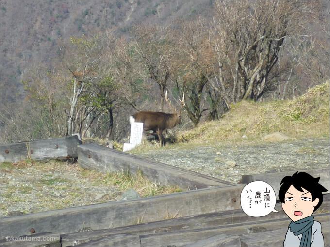 塔ノ岳山頂には鹿もいる