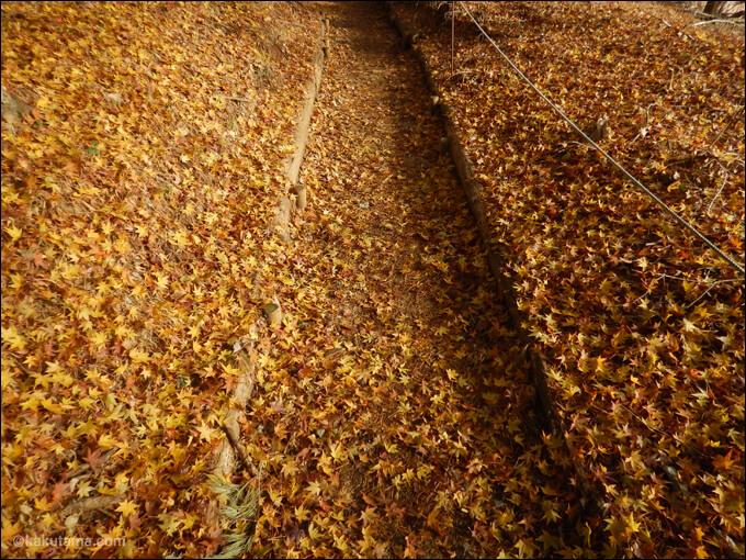 大倉尾根の紅葉じゅうたん