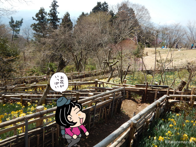 小仏城山の花畑