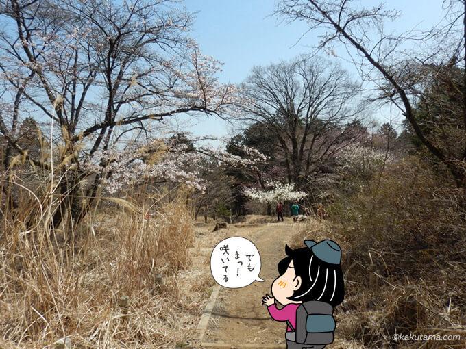 桜の花が綺麗