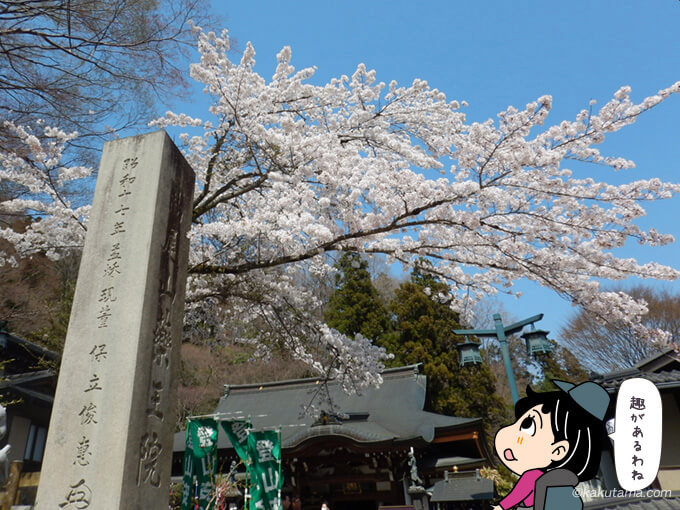 高尾山麓の桜