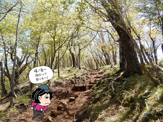 小丸尾根から塔ノ岳へ向かって歩く