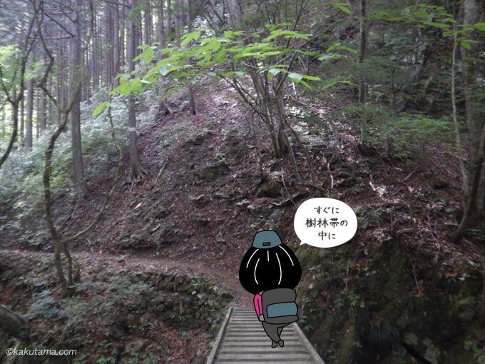 樹林帯と橋1