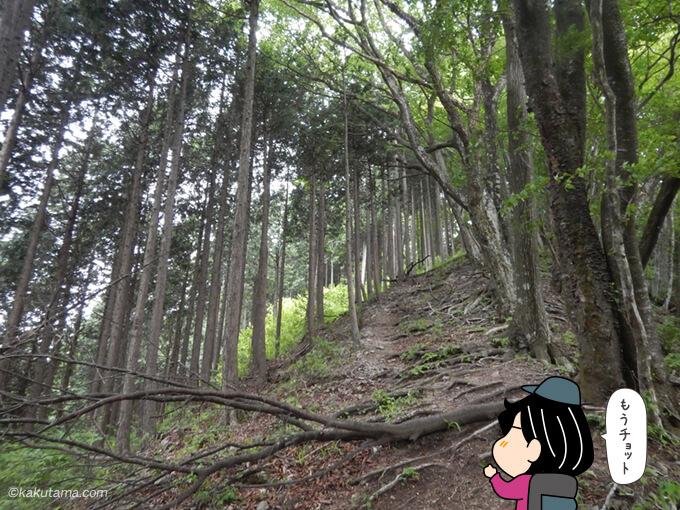 コブタカ山への登り