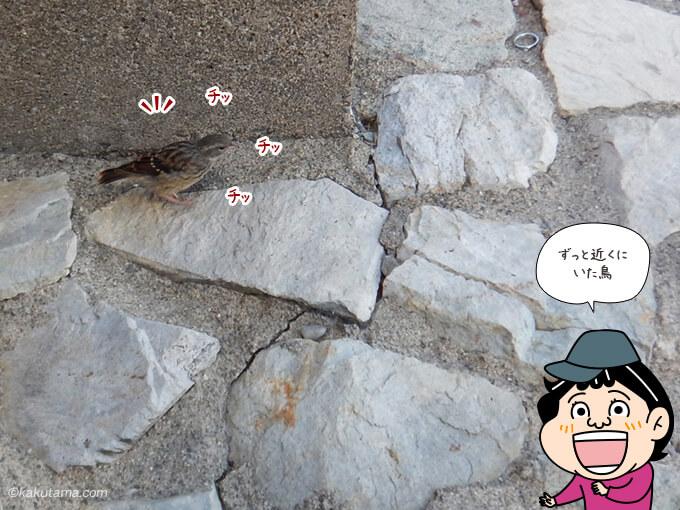 槍ヶ岳山荘テラスにいた鳥