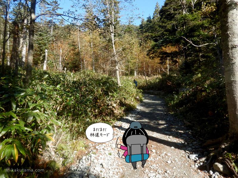 歩きやすい林道