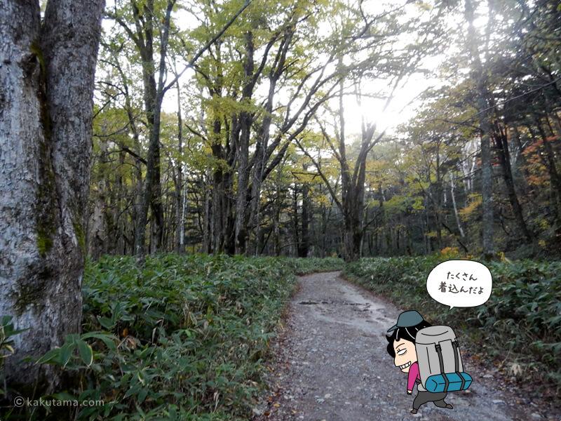 寒い林道を歩く