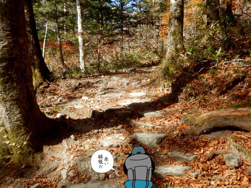 赤い絨毯の登山道