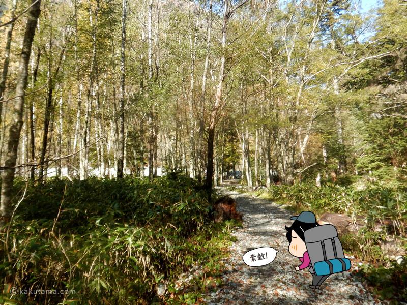 緑まぶしい林道