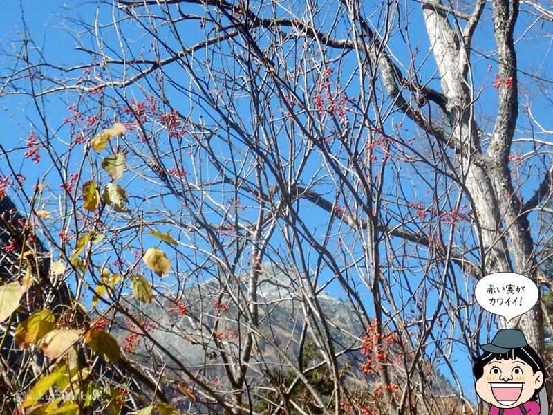 赤い実と青い空