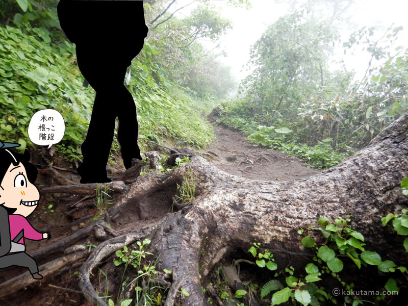 木の根っこ階段を登る