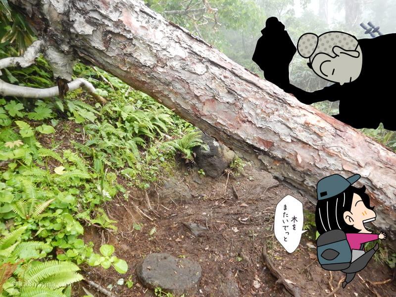 木をまたぐ