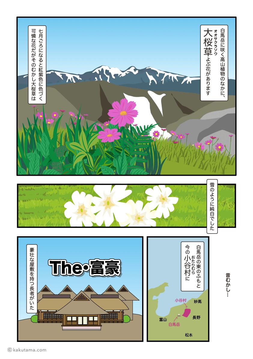 白馬岳に咲くオオサクラソウは昔白い花だった漫画