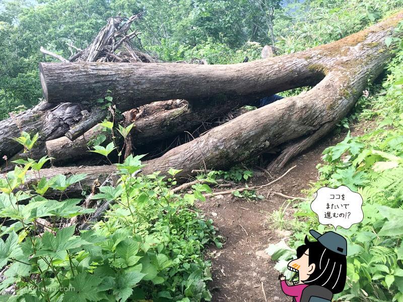 大きな木をまたぐ