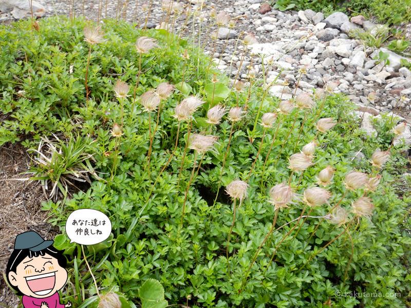 五色ヶ原キャンプ場の花