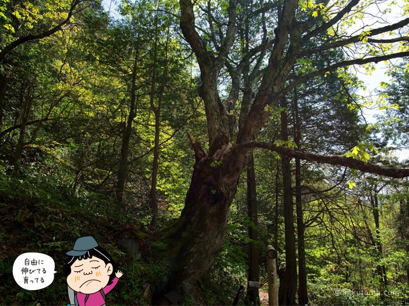 自然林イメージ写真