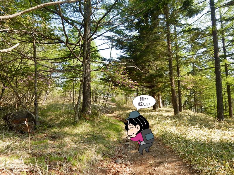 樹林帯に入る
