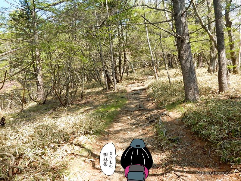 再び樹林帯に入る