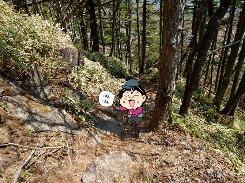 けっこうしんどい登山道