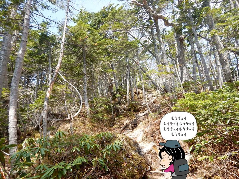 何度目かの樹林帯