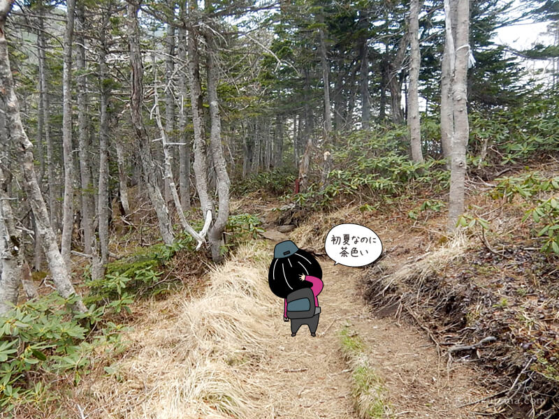 樹林帯に戻る2