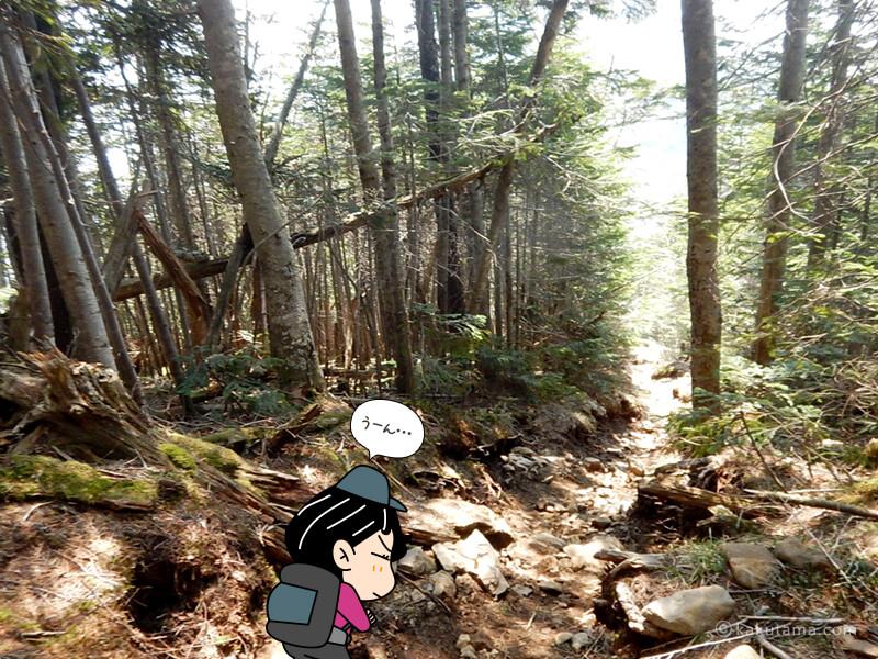 樹林帯を進む
