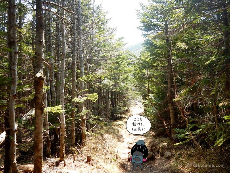 最後の樹林帯を進む