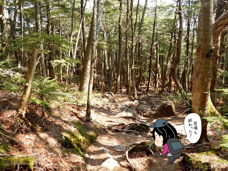 樹林帯を下っていく