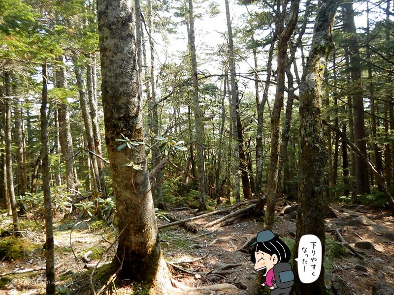 樹林帯を下る1