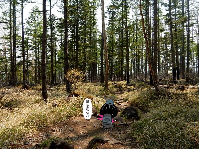 樹林帯を下る2