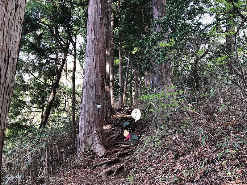 杉の木の道