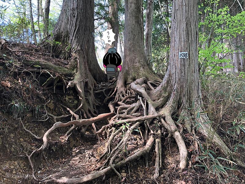 杉の木の道2