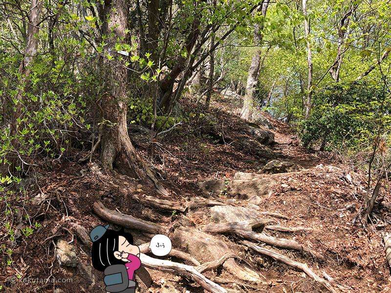 木の根っこの階段