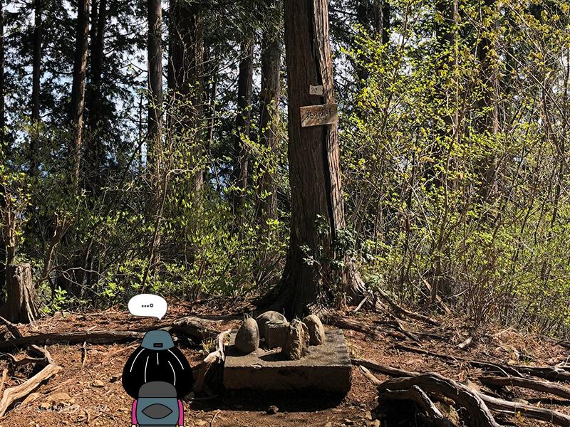 奥ノ院の杉