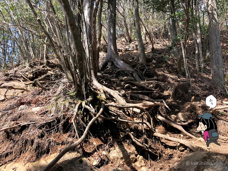 木の根っこの間を上る