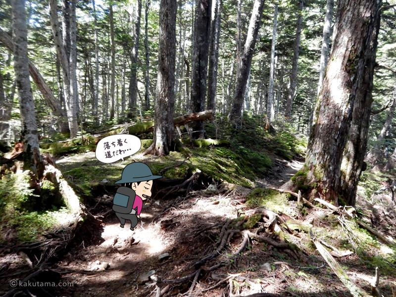 樹林帯を上る