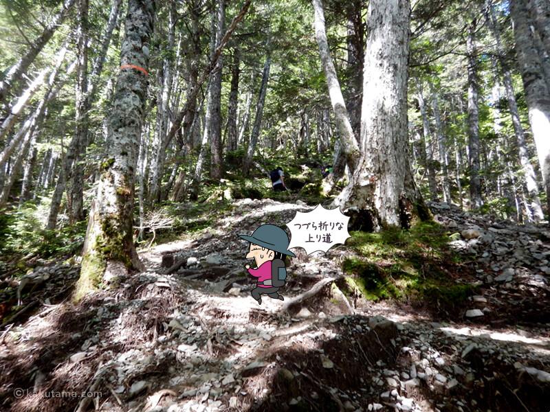 つづら折りの樹林帯を上る