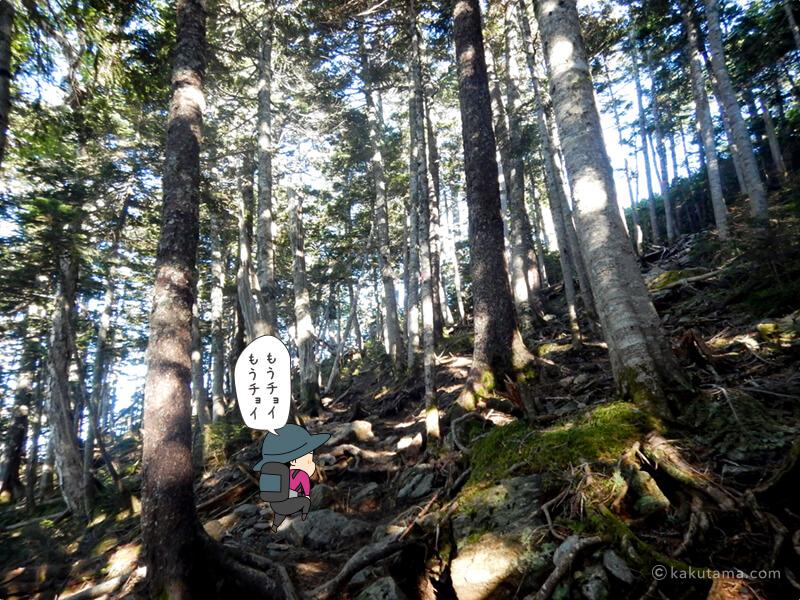 もうチョットで樹林帯を抜ける2