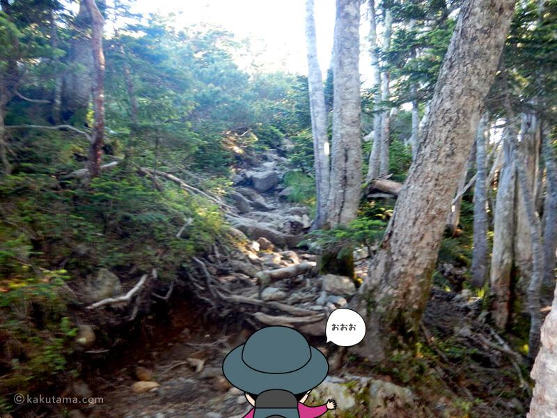 樹林帯を抜けそう