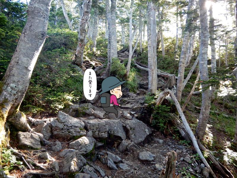 歩きやすい上りの登山道