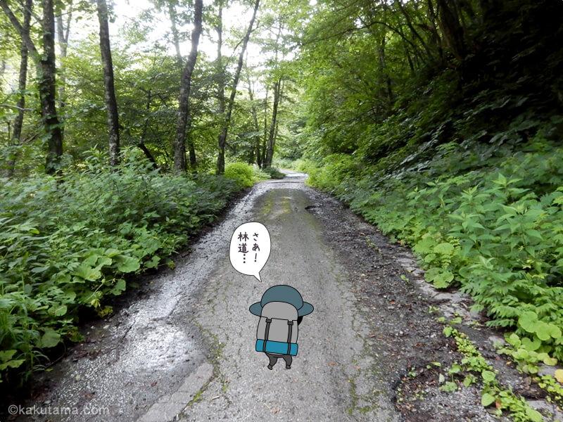 新穂高温泉からの林道