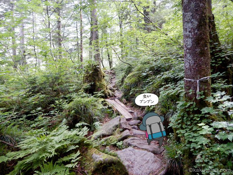 樹林帯を登る1