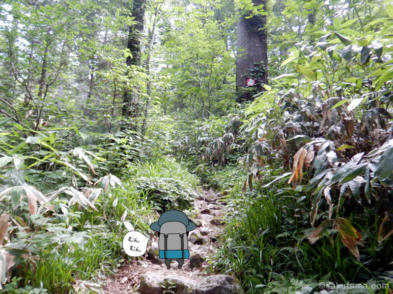 樹林帯を登る2