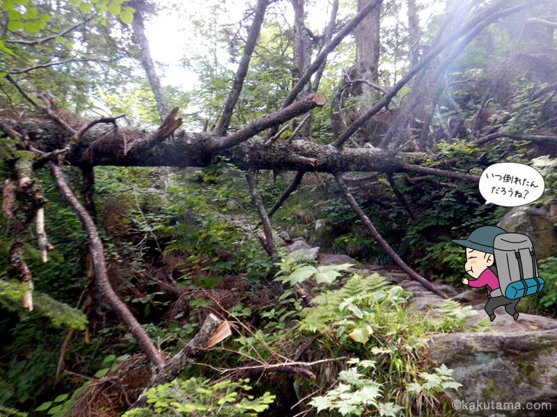 樹林帯を登る3