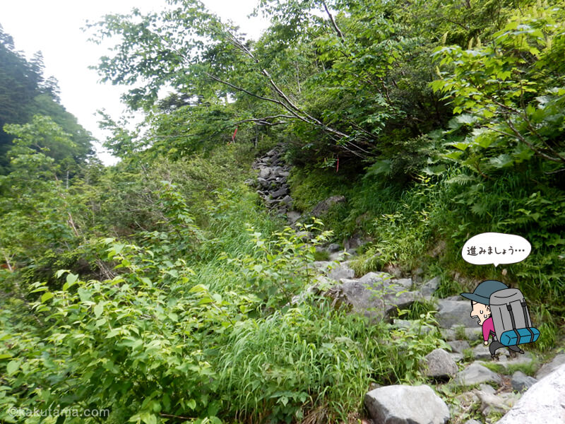 滝谷出合以後も樹林帯1