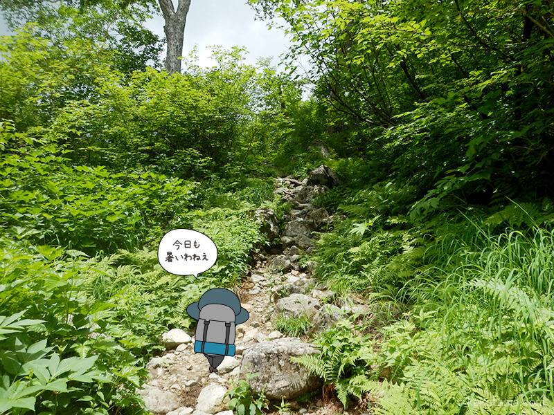 樹林帯の登り